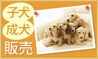 子犬 成犬 販売