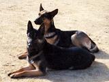見学受付中!犬のしつけ、訓練は六甲ドッグスクールへ!