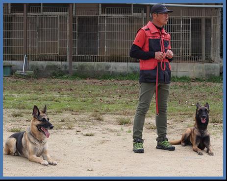 家庭犬のしつけ訓練イメージ