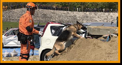 救助犬の模擬試験イメージ