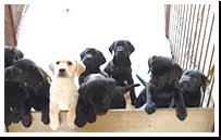 子犬販売イメージ